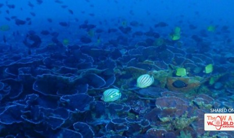 Scientists just found the largest continuous coral system - and it's like nothing we've ever seen   Science   WAS