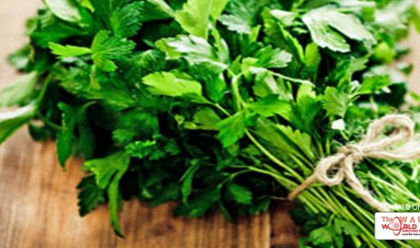 BUYING, USING AND STORING HERBS: 4 RULES TO FOLLOW