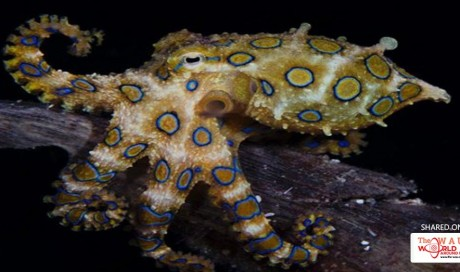 25 Most Terrifying Deep Sea Creatures