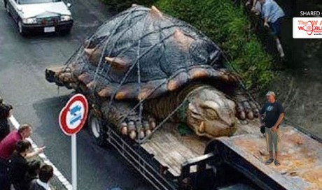A Giant Tortoise Discovered in the Amazon? It's Bigger Than a Car!