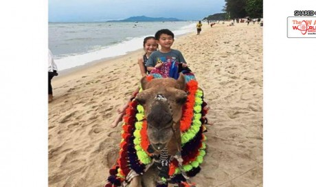 Ride a 'ship of the desert' on the beach in Penang