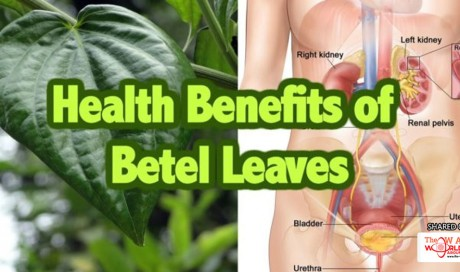 Health benefits of betel leaves can give to our body