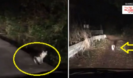 Forest Spirit in Disguise? Cat Leads Lost Humans Out of This Scary Japanese Forest