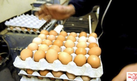 UAE bans eggs imported from US farm