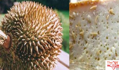10 Most Weird and Bizarre Foods From Around the World