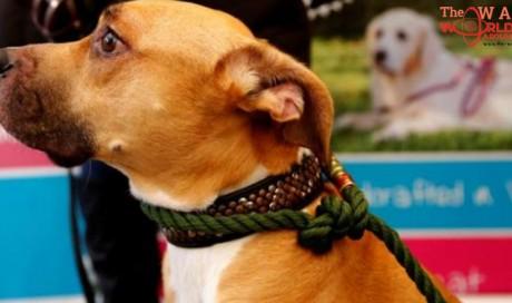 Madhya Pradesh: Pet dog bites rapist, helps victim escape