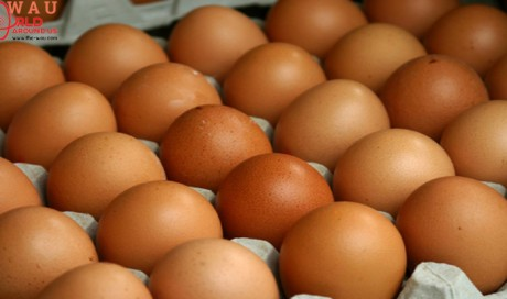 Eggs For Diabetes: Can You Eat Eggs If You Are A Diabetic? Here's The Answer