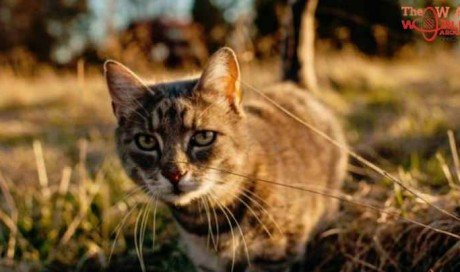 New Zealand village wants to ban all cats