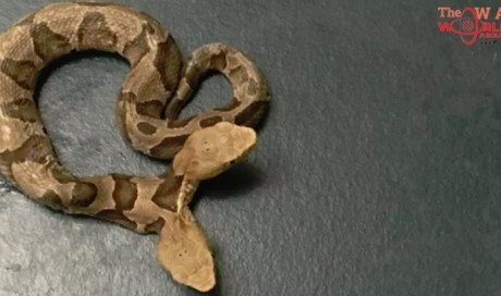 US Woman Finds Extremely Rare Scare Noodle With Two Heads in Her Garden