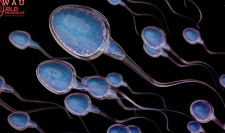 8 Interesting Health Facts You Probably Didn't Know About Sperm