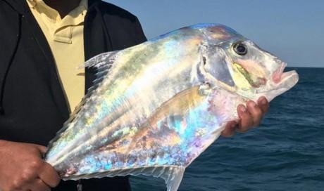 Mystery fish photo goes viral on Qatar social media