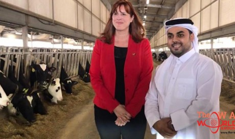Fresh shipment of Canadian dairy heifers arrived in Doha; Delivered to new Al Khor Baladna Farm