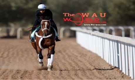 Saudi Racing Cup, Horse Racing cup, Saudi Arabia