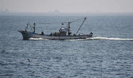 CICPA: Eight violating fishing boats spotted in UAE's territorial waters carrying out prohibited fishing activities