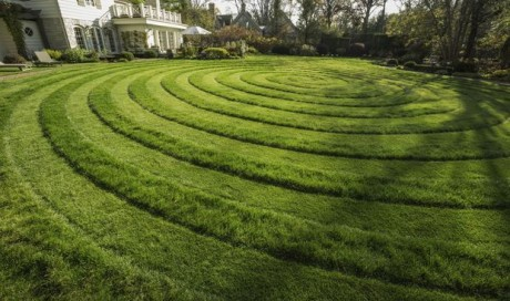 How to Kill your Old Lawn and Start Anew